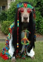 Hippiehund